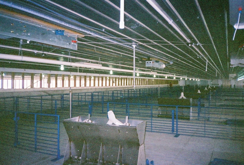 Reaves Buildings - Hog Swine Building Interior